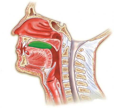 Illustrasjon av anatomi